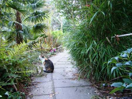 De jungletuin van de bamboekwekerij