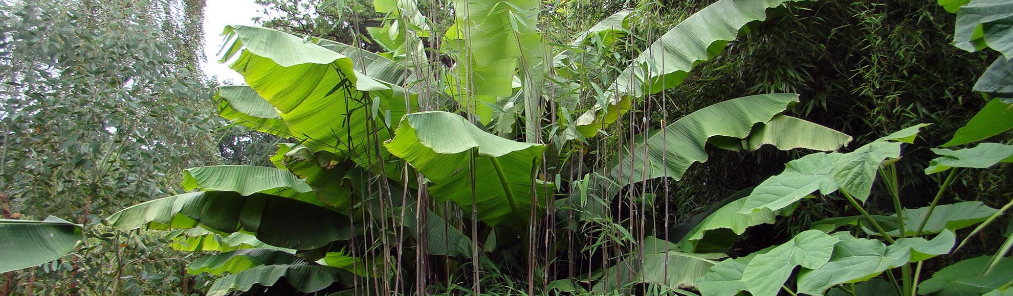 Jungle garden