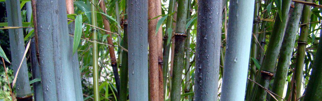 bamboeheader