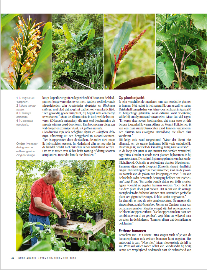 reportage groei en bloei De Groene Prins planten