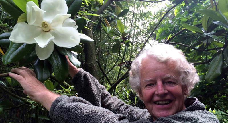 Magnolia grandiflora bij de Groene Prins