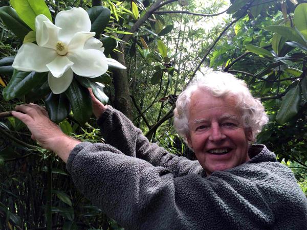 Magnolia grandiflora in bloei