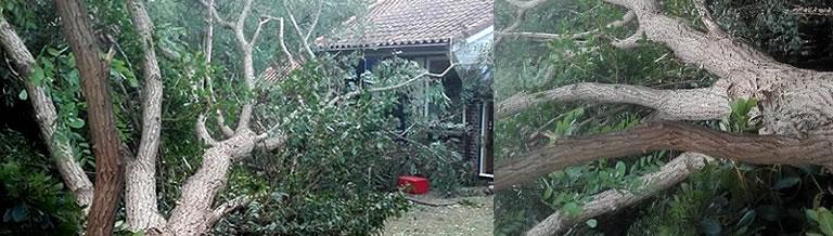 storm in the jungle garden at Nursery De Groene Prins