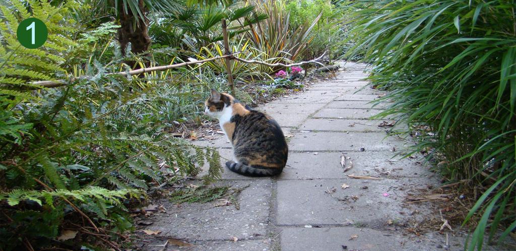 Animals at home in DeGroenePrins botanical garden