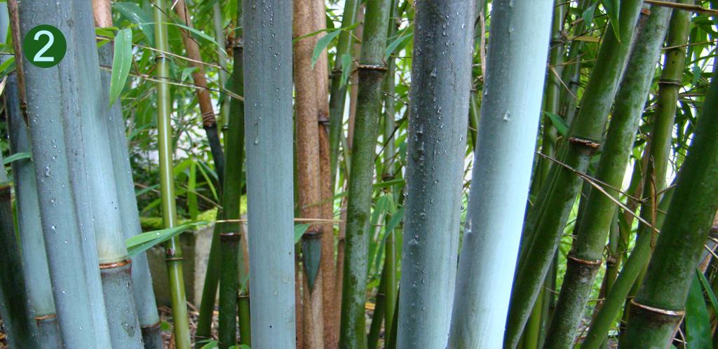 "Borinda ""KR5287"" at DeGroenePrins botanical garden"